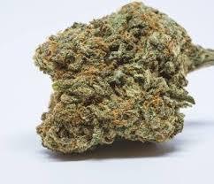 Buy Blue Cheese marijuana strain UK
