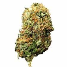 Buy Big Bud Marijuana Strain UK